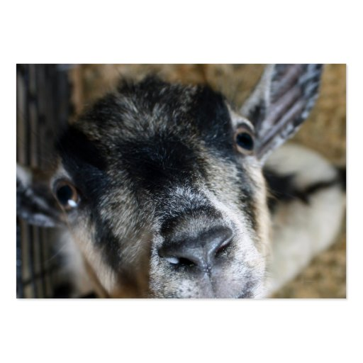 Nosy Goat Looking Up Business Card Templates
