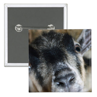 Nosy Goat Looking Up Button