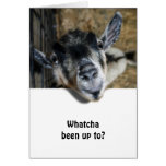 Nosy Goat Looking Up Cards