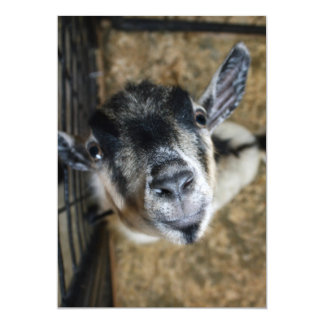Nosy Goat Looking Up Invite