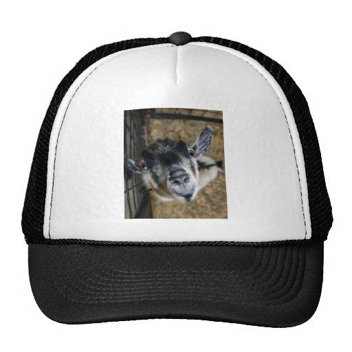 Nosy Goat Looking Up Trucker Hat