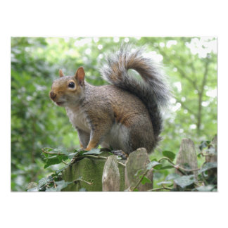 Nosy Gray Squirrel Photo Print