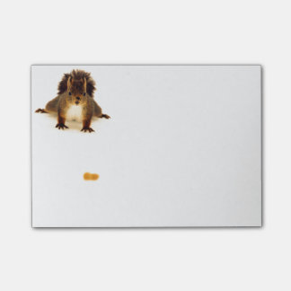 Nosy red squirrel in snow post-it notes