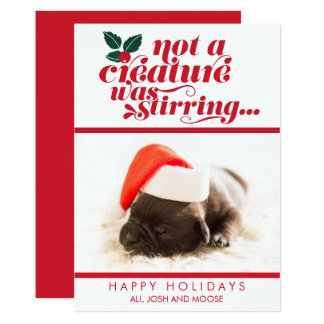 Not a Creature Was Stirring | Pet Christmas Photo Card