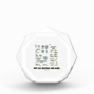 Not All Bacteria Are Alike (Bacterial Morphology) Award