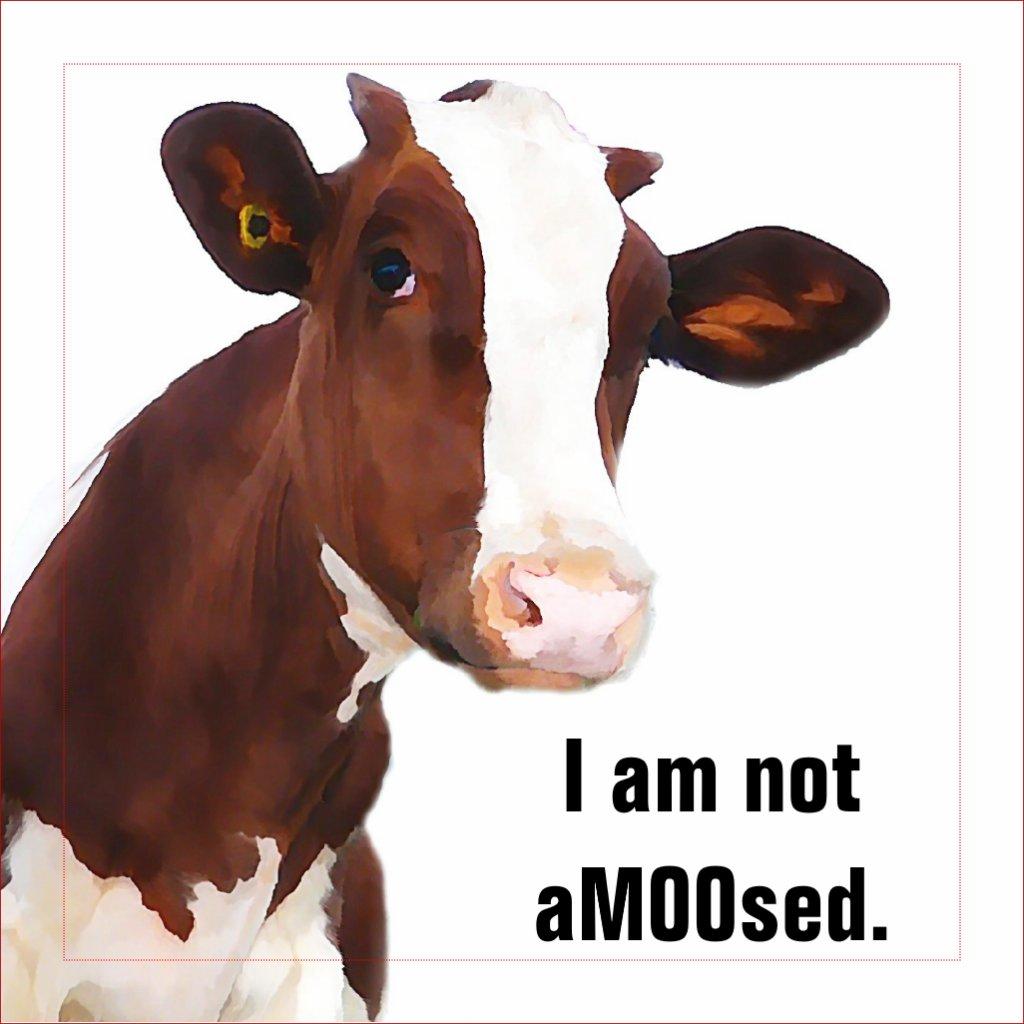 not_amused_funny_amoosed_cow_joke_2_inch_square_button-r4f2bb419badb4767add742518e7941c8_x7kru_1024.jpg?rlvnet=1