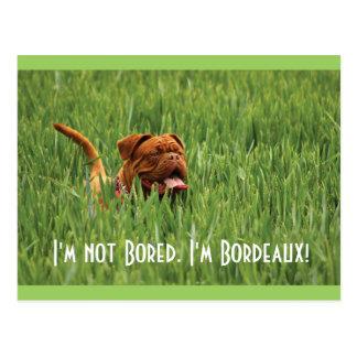 Not Bored. I'm Bordeaux! Dog Postcard