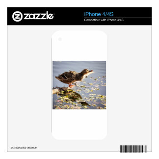 Not Duck iPhone 4 Skin