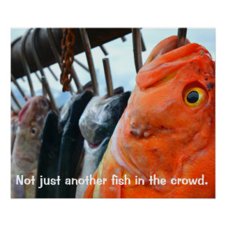 Not just another fish in the crowd Poster