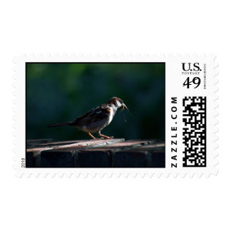 Not-So-Early Bird Must Settle for the Crane Fly Postage