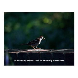 Not-So-Early Bird Postcard
