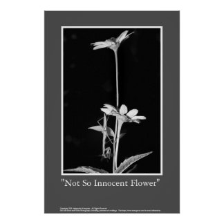 Not So Innocent Flower Poster