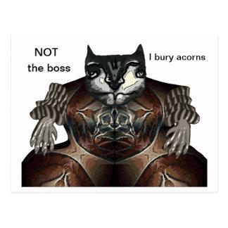 NOT the boss - I bury acorns Postcard