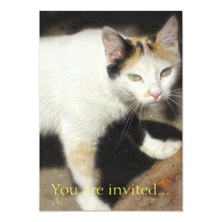 Not Very Friendly Cat Que Me Ves Card