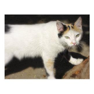 Not Very Friendly Cat Que Me Ves Postcard