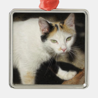 Not Very Friendly Cat Que Me Ves Square Metal Christmas Ornament