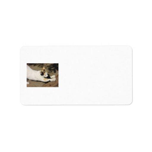 Not Very Friendly Cat Stretch Address Label