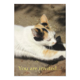 Not Very Friendly Cat Stretch Card