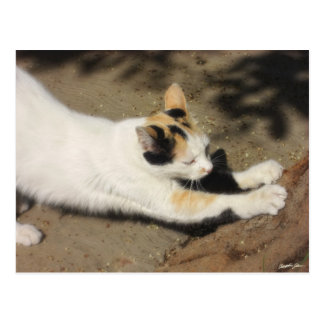 Not Very Friendly Cat Stretch Postcard