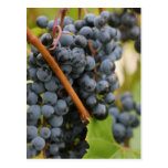 grapes, wine, vine, vineyard, door, county,