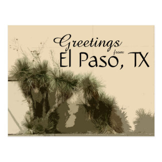 """Not Your Average Wallflowers"" / El Paso, TX Postcard"