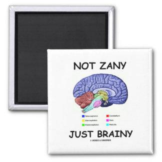 Not Zany Just Brainy Brain Anatomy Humor Refrigerator Magnets