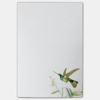 Notas de post-it de los colibríes de Goulds