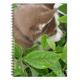 Note Book - Siberian Husky