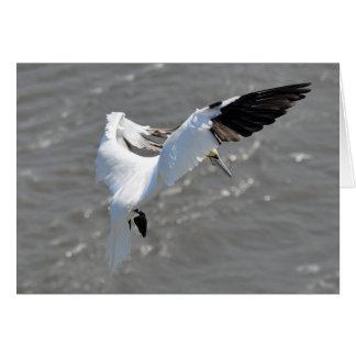 Note card: Atlantic Gannet