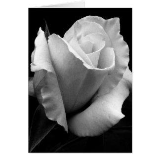 Note Card - B/W Rose