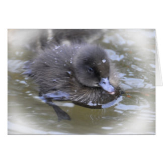 Note Card: Black Duckling Card