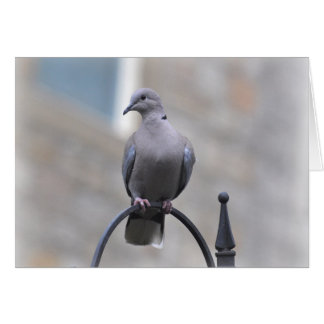 Note Card: Collared Dove Card