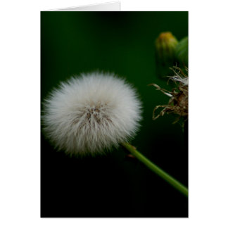 Note Card - Dandelion