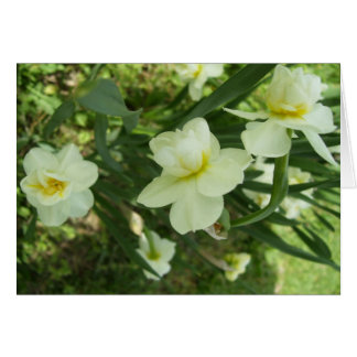 Note Card - Double Blooming Narciss