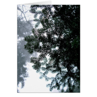 Note Card - Evergreen Branch