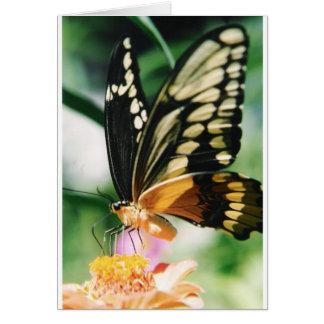 Note Card: Fairy Dance Card