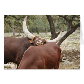 Note Card - Invitation - Egyptian Cattle