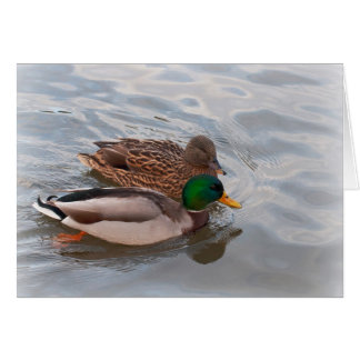 Note Card: Mallard Ducks Card