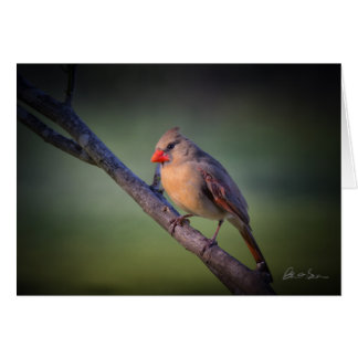 Note Card - Northern Cardinal (female)