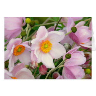 NOTE CARD /PALE PINK ANEMONES/BLANK INSIDE/PHOTOG.