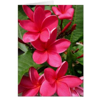 note card - pink plumerias