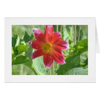NOTE CARD/PINKISH-RED DAHLIA/PHOTOG./BLANK INSIDE CARD