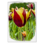 Note Card - Red and Yellow tulips