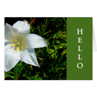 "NOTE CARD""SATINY WHITE STAR-SHAPED FLOWER""/ HELLO CARD"