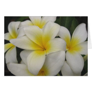 note card - white plumerias
