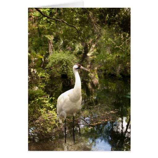 Note Card - Whooping Crane