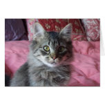 Note Card with kitten photo