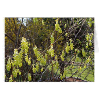 Note Card with Winter Hazel