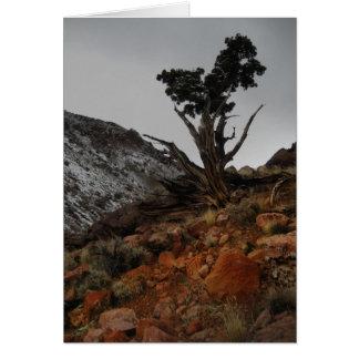 Note Cards - Bristle Cone Pine