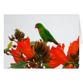Note cards wtih exotic parrot on orange flowers